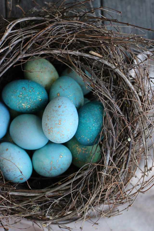 Dyed Robin Eggs