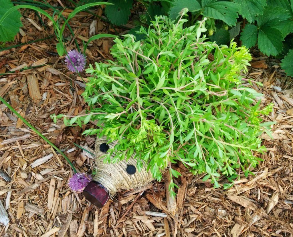 Hedgehog Planter from Plastic Bottle