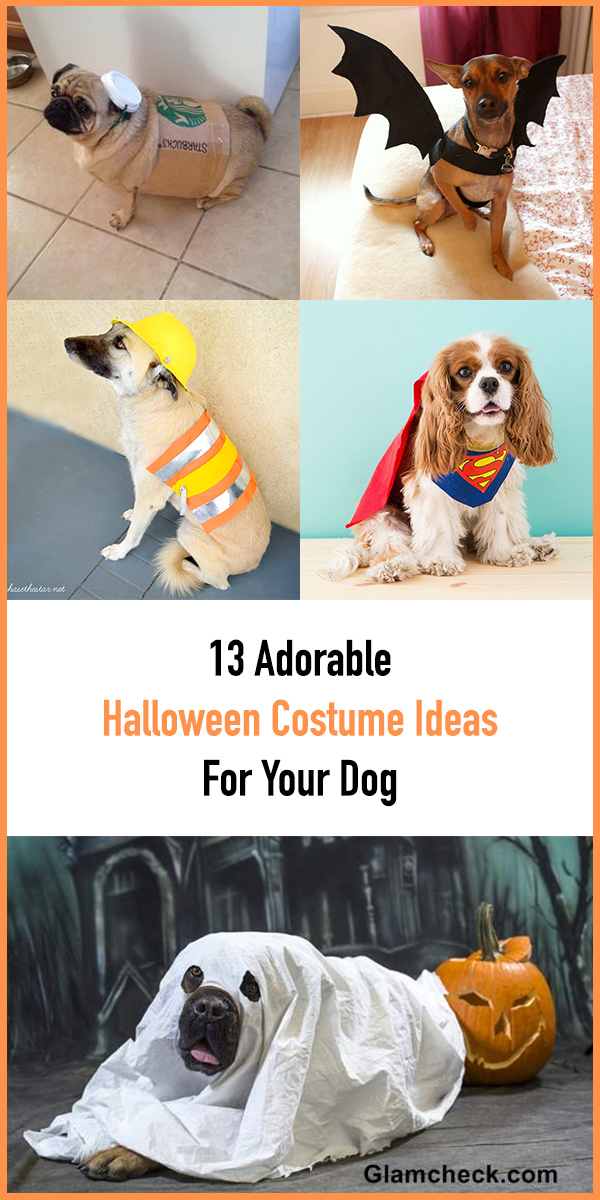 13 Adorable Halloween Costume Ideas For Your Dog