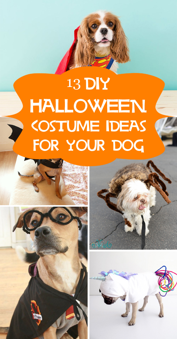 13 Cool DIY Halloween Costume Ideas for Your Dog
