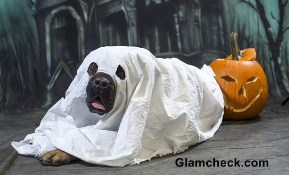 Dog ghost costume