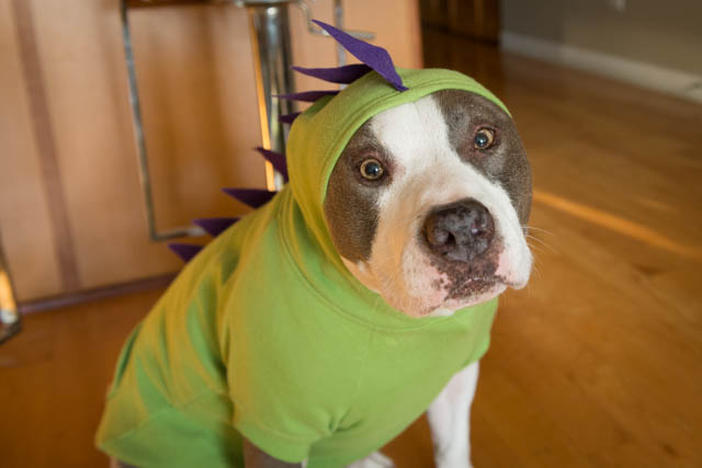 Dinosaur Dog Hoodie
