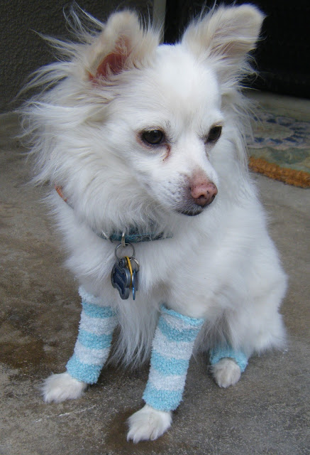 Doggy Leg Warmers