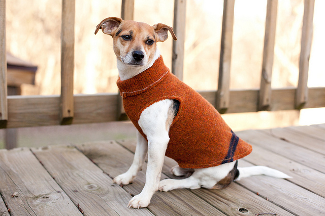 Sweater sleeve dog coat