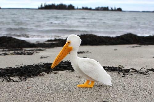 The Peculiar Pelican