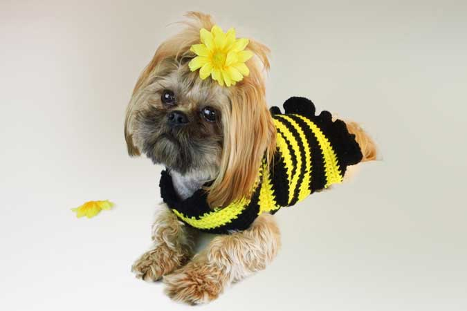 Bumble Bee Dog Sweater