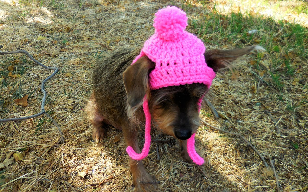 Dog Hat Crochet Pattern